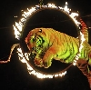 Цирки в Волгограде