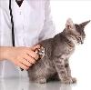 Ветеринарные клиники в Волгограде